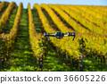 drone field landscape 36605226