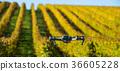 drone field landscape 36605228