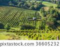drone field landscape 36605232