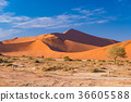 Sand dunes in the Namib desert at dawn 36605588