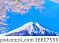 mountain, fuji, mt 36607599