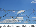 Barbed wire detail 36609387