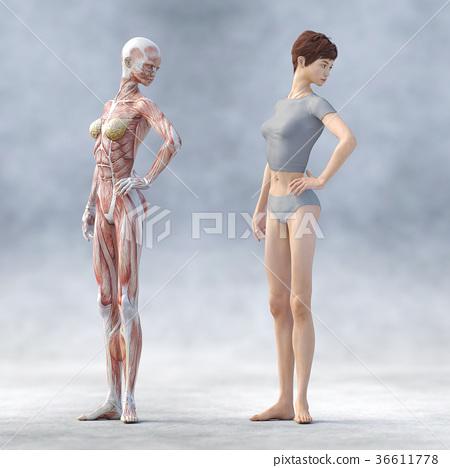 肌肉 肌肉发达 骨架 36611778