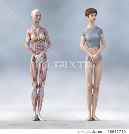 肌肉 肌肉发达 骨架 36611780
