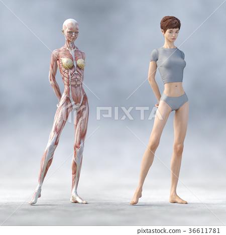 肌肉 肌肉发达 骨架 36611781