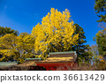kitano shrine, kitano tenman-gu, clear sky 36613429