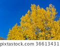 kitano shrine, kitano tenman-gu, clear sky 36613431