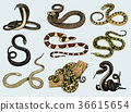 Set Viper Snake. serpent cobra and python 36615654