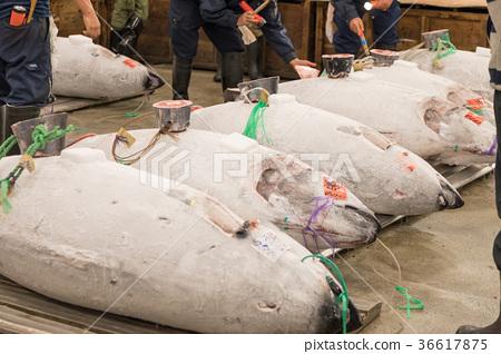 Tuna market 36617875