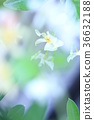 꽃, 플라워, 식물 36632188