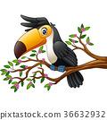 toucan bird flower 36632932