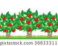vector, vectors, fruit 36633311