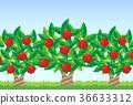 vector, vectors, fruit 36633312