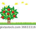 vector, vectors, fruit 36633316