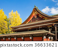 kitano shrine, kitano tenman-gu, ginkgo 36633621