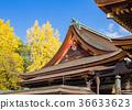 kitano shrine, kitano tenman-gu, ginkgo 36633623