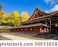 kitano shrine, kitano tenman-gu, ginkgo 36633628