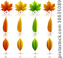Set of colorful autumn leaves 36635089