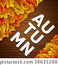 잎, 가을, 단풍 36635268