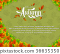 Autumn background with colorful leaves 36635350