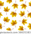 Golden maple leaves isolated on white background 36635383