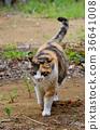 삼색 털 고양이 36641008