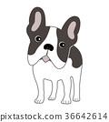 法國鬥牛犬 36642614
