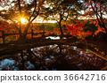 ต้นเมเปิล,แหล่งน้ำ,สระน้ำ 36642716