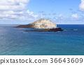 섬, 바다, 해안 36643609