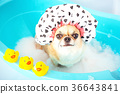 Dog shower 36643841