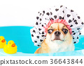 Dog shower 36643844