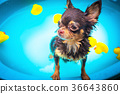 Cute dog shower 36643860