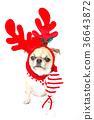 Christmas dog isolated on white 36643872