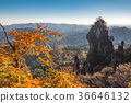 Mount Myōgi, maple, yellow leafe 36646132