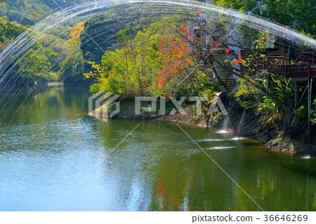 가을, 시즌, 메이플 레드, 단풍 나무, 잎, 물, 나무, 아시아, 대만, miaoli 카운티, 신선한, 자연 36646269