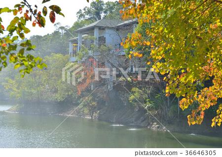 秋天,季節,紅,楓樹,葉子,水,樹,亞洲,台灣,苗栗縣,新鮮,自然 36646305