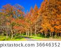 미즈모토 공원, 미즈모토코엔, 가을 36646352