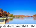 ฤดูใบไม้ร่วง,สวน,สวนสาธารณะ 36646361