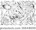 Hand Drawn of Bulb and Stem Vegetables Background 36648699