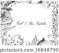 Bulb and Stem Vegetables Frame on White Background 36648700