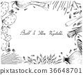 Bulb and Stem Vegetables Frame on White Background 36648701