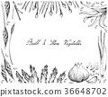 Bulb and Stem Vegetables Frame on White Background 36648702