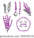 Lavender set. Hand drawn lavender flowers 36649559