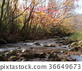 Hanazono Valley, autumn, autumnal 36649673