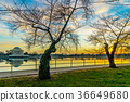 Washington, DC at the Tidal Basin and Jefferson 36649680