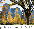 Marunouchi in autumn, colored leaves 36650173
