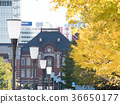Tokyo Station, autumn leaves 36650177