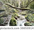 Sketch of Yakushima handwritten world heritage clear stream 36650914