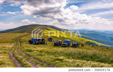 blueberry harvesting in Carpathian mountains 36669176