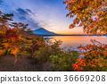 Fuji Mountain in Autumn 36669208
